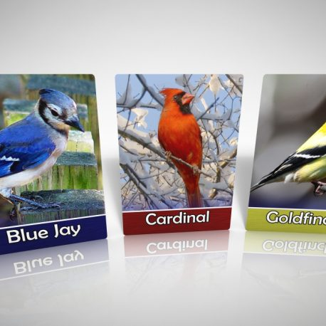 BFF_BirdCards-BlueJayCardinalGoldfinch