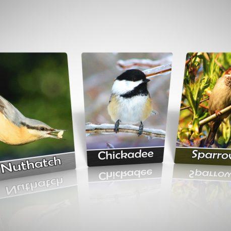 BFF_BirdCards-NuthatchChickadeeSparrow
